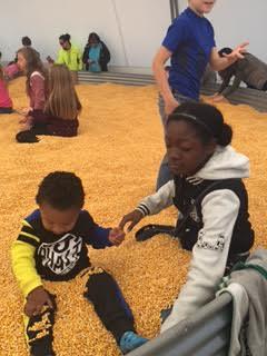 Konw's Corn